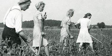 Feldarbeit in Lieto